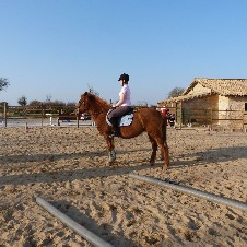 équitation / fitness