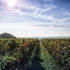 Domaine viticole de Pierre et Bertrand Couly